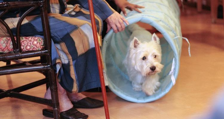 jeux et animations avec nos chiens bénévoles en maison de retraite