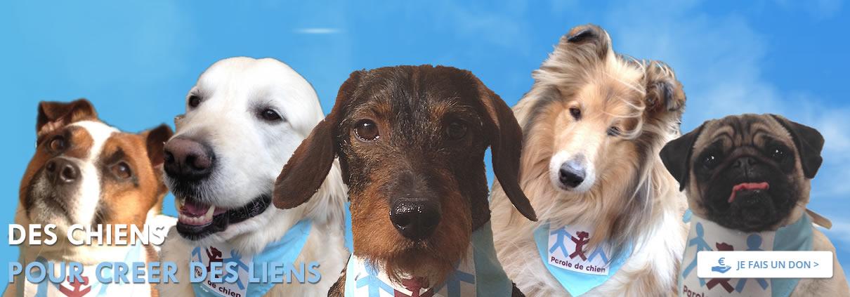 plusieurs chiens de l'association