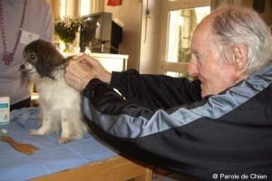 un chien bénévole se fait toiletter par une personne âgée
